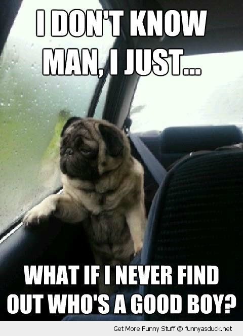 introspective pug animal car dog window who's a good boy funny pics pictures pic picture image photo images photos lol