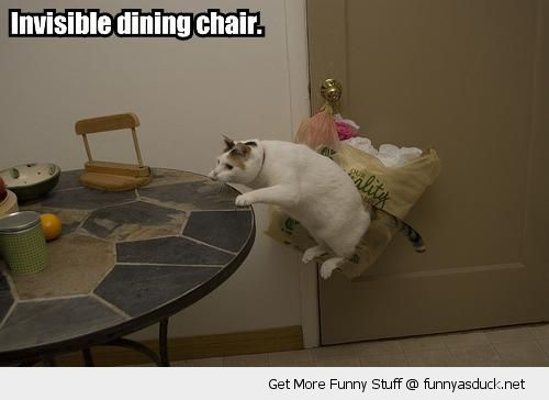 invisible dining chair lolcat animal jumping table funny pics pictures pic picture image photo images photos lol
