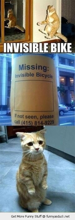 sad cat missing invisible bike lolcat animals funny pics pictures pic picture image photo images photos lol