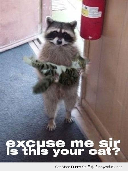 excuse me your cat lolcat animal raccoon holding carrying funny pics pictures pic picture image photo images photos lol