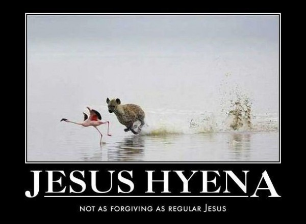 jesus hyena chasing flamingo bird animal animal walk run water funny pics pictures pic picture image photo images photos lol