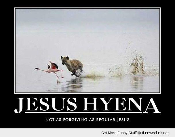 jesus hyena chasing flamingo bird animal animal walk run water funny ...
