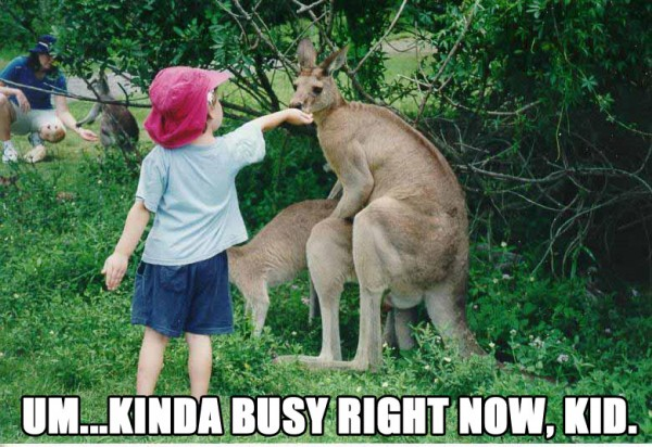 kinda busy kid kangaroo sex boy food animal funny pics pictures pic picture image photo images photos lol