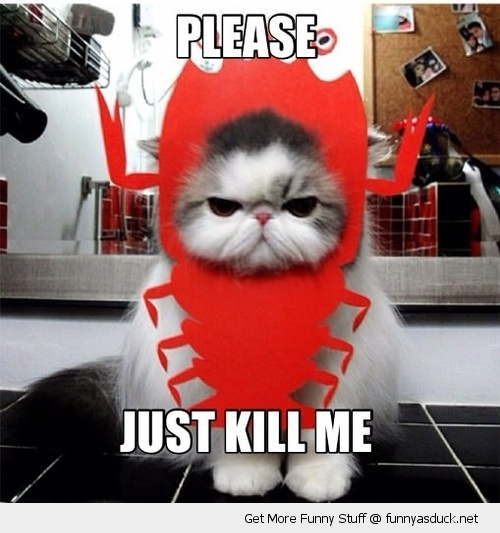 please kill me cat cute kitten lobster costume sad angry grumpy funny pics pictures pic picture image photo images photos lol
