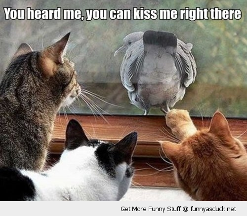 kiss my ass arse bird pigeon window cats animals funny pics pictures pic picture image photo images photos lol