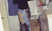 cats kittens climbing womans leg hungry please animals lolcats funny pics pictures pic picture image photo images photos lol