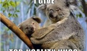 koality hugs pun joke koala bear happy animals funny pics pictures pic picture image photo images photos lol