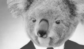 boss posh koala bear suit animal koalafied pun joke funny pics pictures pic picture image photo images photos lol