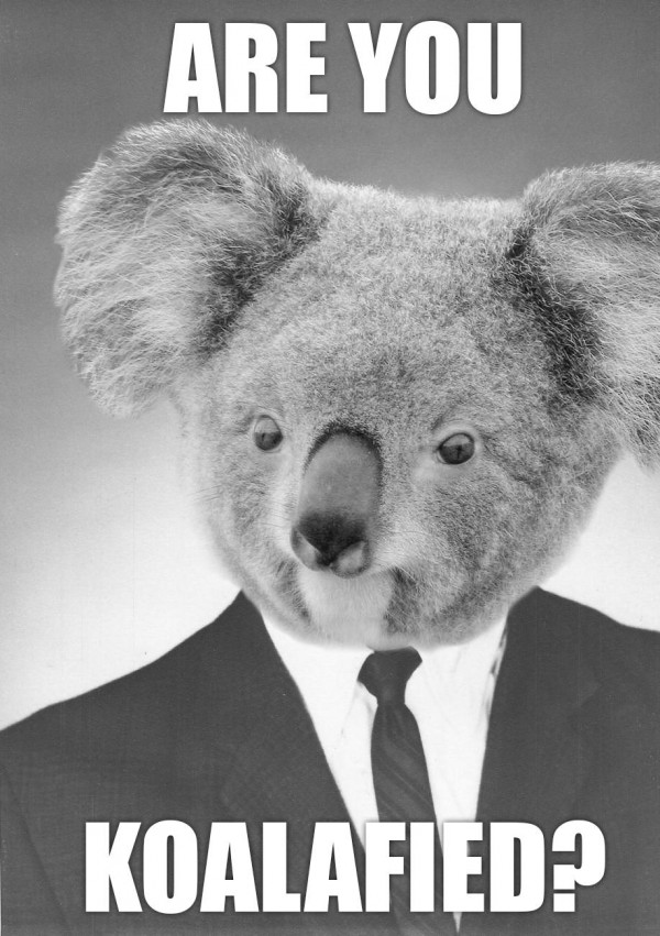 boss posh koala bear suit animal koalafied pun joke funny pics pictures pic picture image photo images photos lol