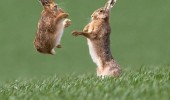 kung fu fighting rabbits bunnies animals cute funny pics pictures pic picture image photo images photos lol
