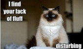 lack of fluff disturbing cat grumpy angry cat animal funny pics pictures pic picture image photo images photos lol
