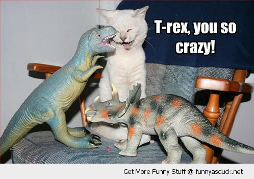 laughing cat lolcat kitten toy dinosaurs t-rex funny pics pictures pic picture image photo images photos lol