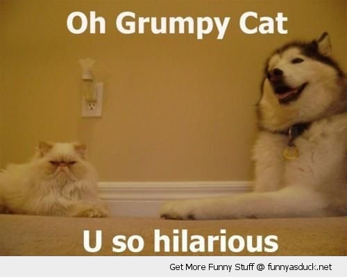 grumpy cat laughing dog animal hilarious lolcat funny pics pictures pic picture image photo images photos lol