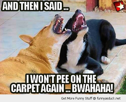 [Image: funny-laughing-dogs-pee-carpet-pics.jpg]