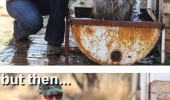 laughing hyena animal bath lol'd animal at first funny pics pictures pic picture image photo images photos lol
