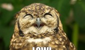 lowl laughing happy owl bird animal smiling funny pics pictures pic picture image photo images photos lol