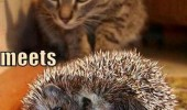 learning experience cat lolcat stalking animal hedgehog funny pics pictures pic picture image photo images photos lol