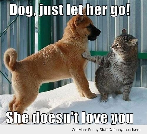 let her go dog cat animal love lolcat funny pics pictures pic picture image photo images photos lol