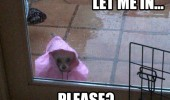 please let me in dog animal raincoat outside rain funny pics pictures pic picture image photo images photos lol