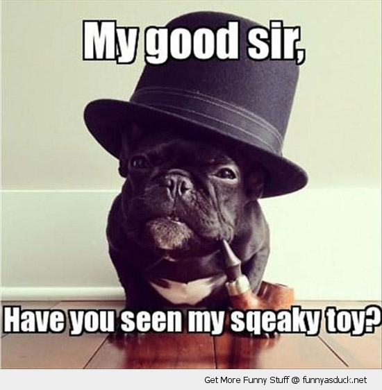 my good sir like dog top hat squeaky toy posh animal funny pics pictures pic picture image photo images photos lol