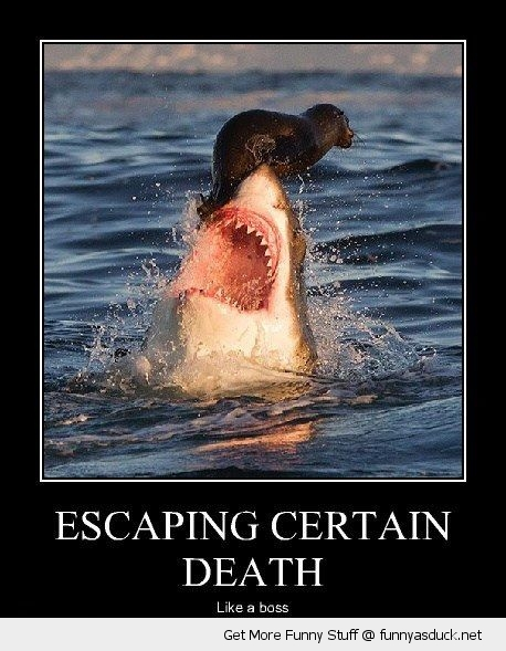 escaping death like a boss shark seal animal bite funny pics pictures pic picture image photo images photos lol