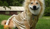 worst zoo ever dog lion costume dressed up animal funny pics pictures pic picture image photo images photos lol