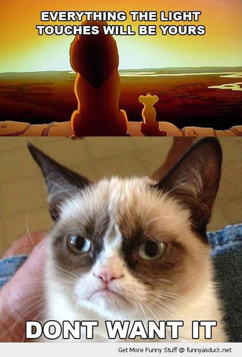 lion king angry cat do not want disney funny pics pictures pic picture image photo images photos lol