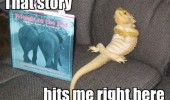 lizard bearded dragon reading book story right here animal funny pics pictures pic picture image photo images photos lol