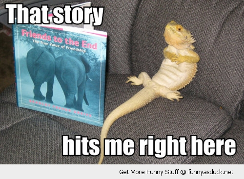 lizard bearded dragon reading book story right here animal funny pics    Funny Lizard Jokes