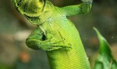 good side better posing for camera lizard animal funny pics pictures pic picture image photo images photos lol