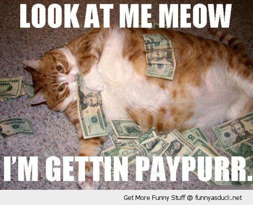 look meow getting paypurr gangster rapper cat fat animal money dollars funny pics pictures pic picture image photo images photos lol