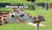 ostrich giraffe love wrong weird babies animals funny pics pictures pic picture image photo images photos lol