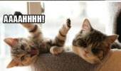 crazy mad cat animal tongue out kitten couch wazzup funny pics pictures pic picture image photo images photos lol