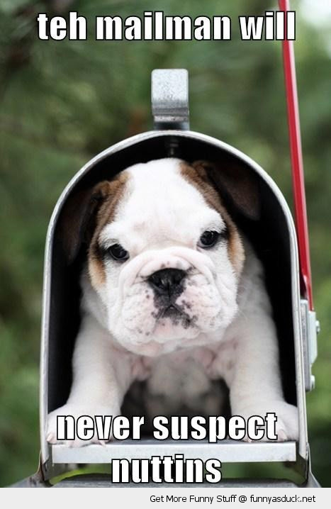 cute puppy mail box dog animal mailman never suspect funny pics pictures pic picture image photo images photos lol