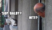 cat man looking window lolcat animal sup baldy funny pics pictures pic picture image photo images photos lol