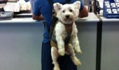 dog animal carry man bag back pack barkpack store shop funny pics pictures pic picture image photo images photos lol