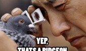 yep that's a pigeon bird animal man looking eye glass funny pics pictures pic picture image photo images photos lol