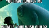 manatee aquarium kid girl talking awoken me what wish child animal funny pics pictures pic picture image photo images photos lol