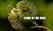 come at me bro angry bird mantas insect fighting nature funny pics pictures pic picture image photo images photos lol