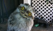 me hootsta gusta dumb baby owl animal meme funny pics pictures pic picture image photo images photos lol