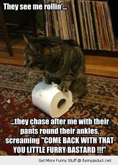 see me rollin cat lolcat animal stealing toilet paper chasing furry bastard funny pics pictures pic picture image photo images photos lol