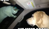 we meet again dog cat animal car wind shield screen funny pics pictures pic picture image photo images photos lol