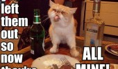 all mine cat lolcat animal table sticking out tongue funny pics pictures pic picture image photo images photos lol