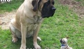 mini me dogs puppy animals sitting grass funny pics pictures pic picture image photo images photos lol