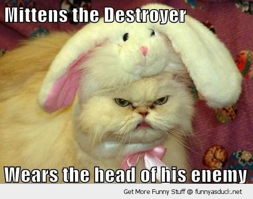 mittens the destroyer angry grumpy cat rabbit bunny hat animal funny pics pictures pic picture image photo images photos lol