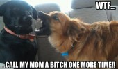 mom bitch angry dog shouting bite car animal funny pics pictures pic picture image photo images photos lol