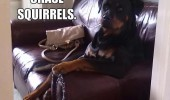 most interesting dog animal meme chase squirrels wait yes I do funny pics pictures pic picture image photo images photos lol