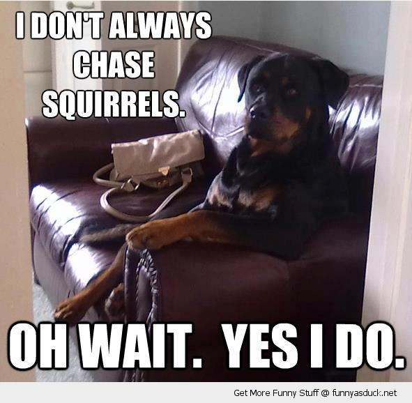 Most Interesting Dog Animal Meme Chase Squirrels Wait Yes Funny