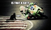 motorbike racer track that a cat sup animal funny pics pictures pic picture image photo images photos lol