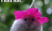 i has hat cute animal mouse flower on head funny pics pictures pic picture image photo images photos lol